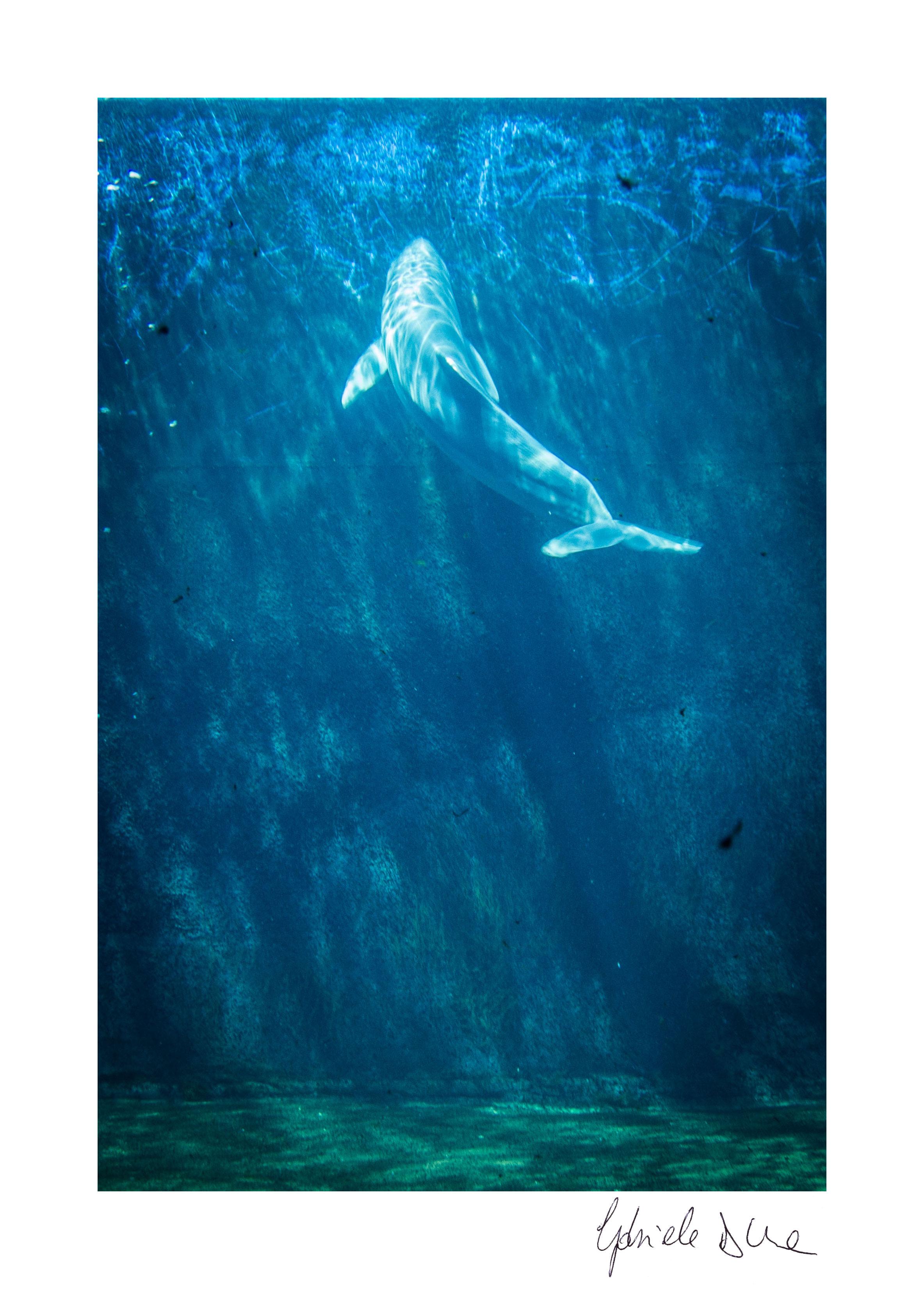 Gabriele D'Uva  - Dolphin (2015)